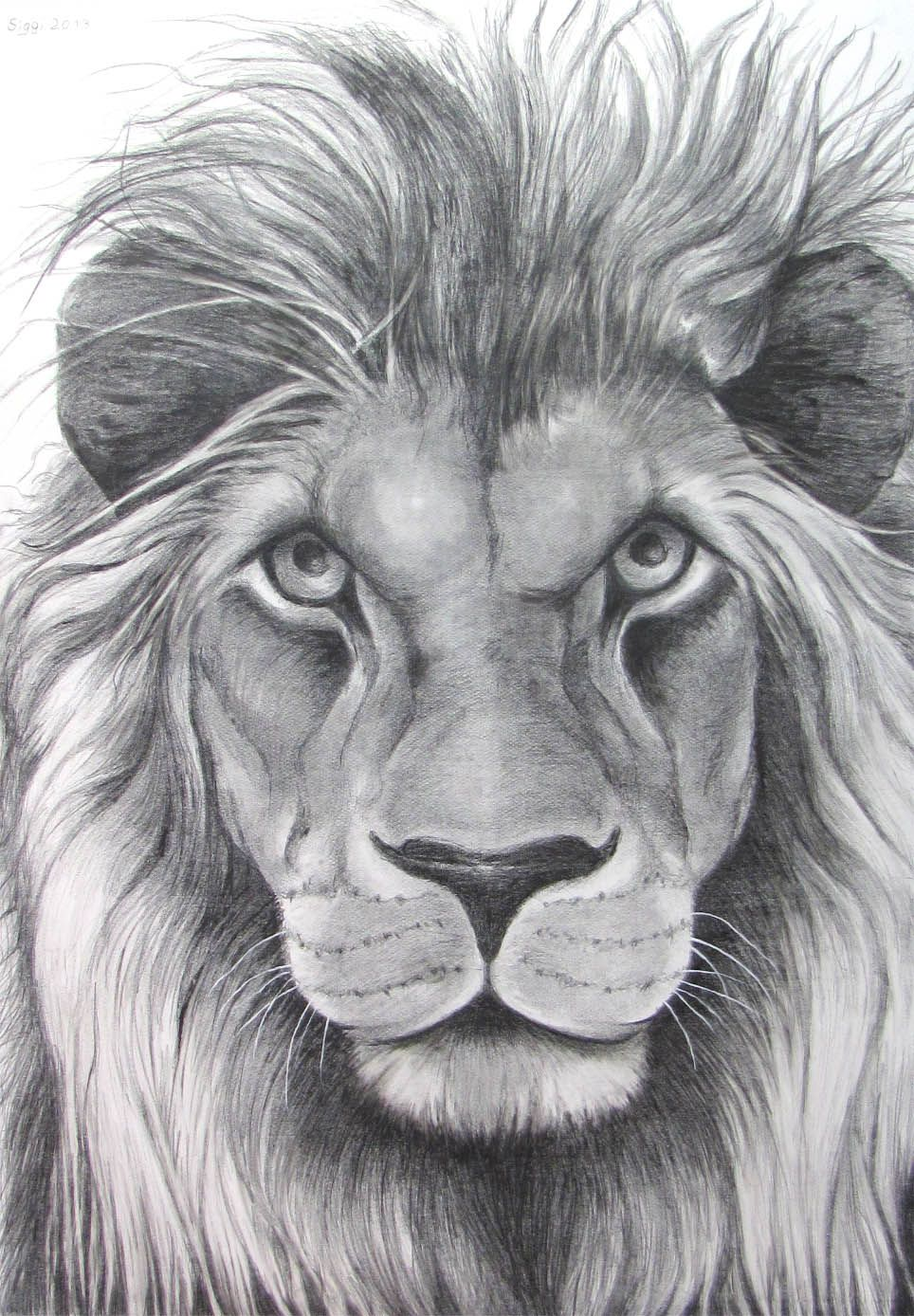 Lion pencil drawing google search tattoo ideas pencil drawings