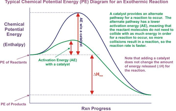 Effect Of Catalysts On Rate Of Reaction Catalyst Activationenergy Energy Activities Potential Energy Exothermic Reaction