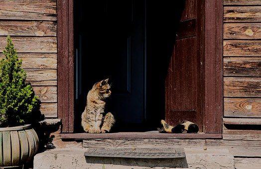 Cat, She-Cat, House, Wood