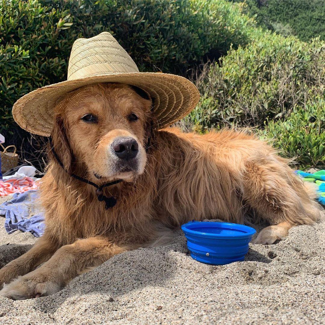 Louie The Golden Retriever On Instagram Basic Beaches Be Like