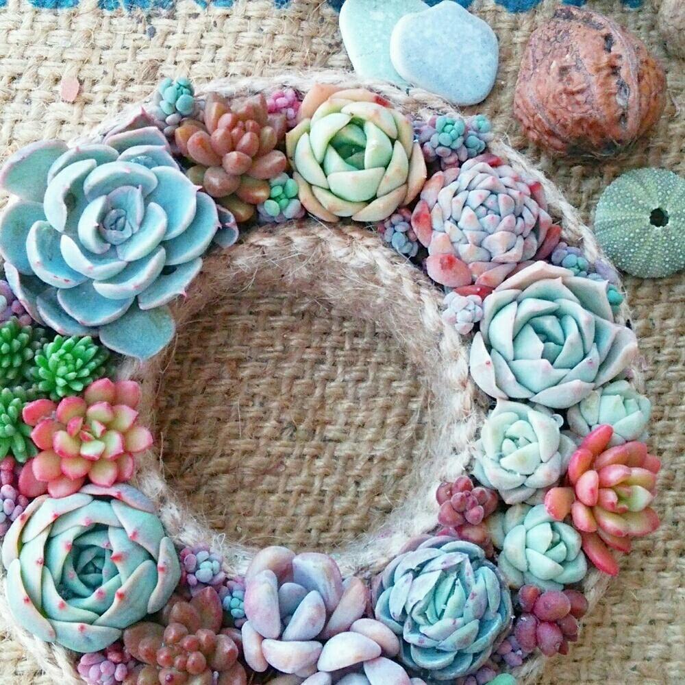 *ajisai*さんが投稿した画像です。他の*ajisai*さんの画像も見てませんか?|おすすめの観葉植物や花の名前、ガーデニング雑貨が見つかる!GreenSnap(グリーンスナップ)