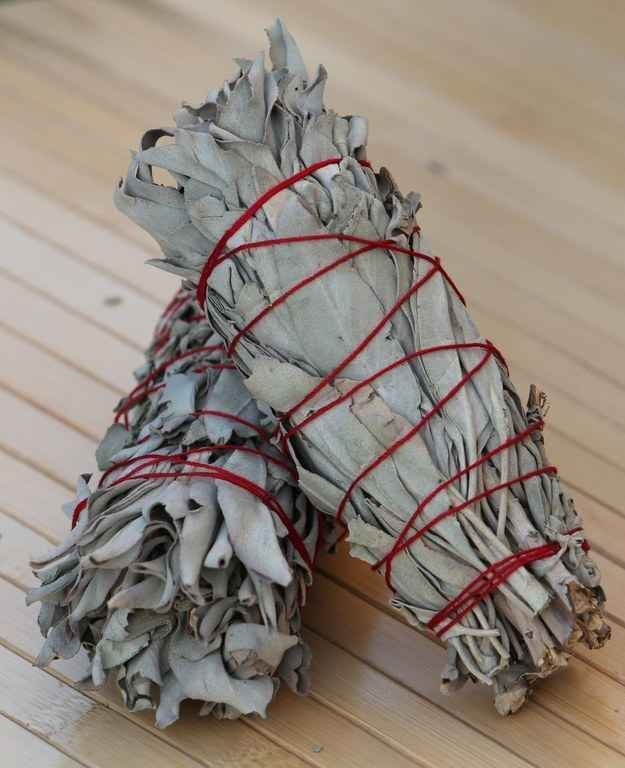 Photo of Adding sage to your campfire or fireplace will keep mosquitoes and insects away …