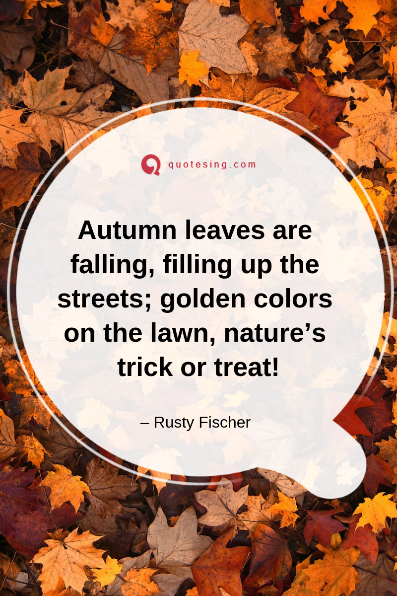 Great Fall Quotes Look In The Mirror Quotes Albert Camus The Fall