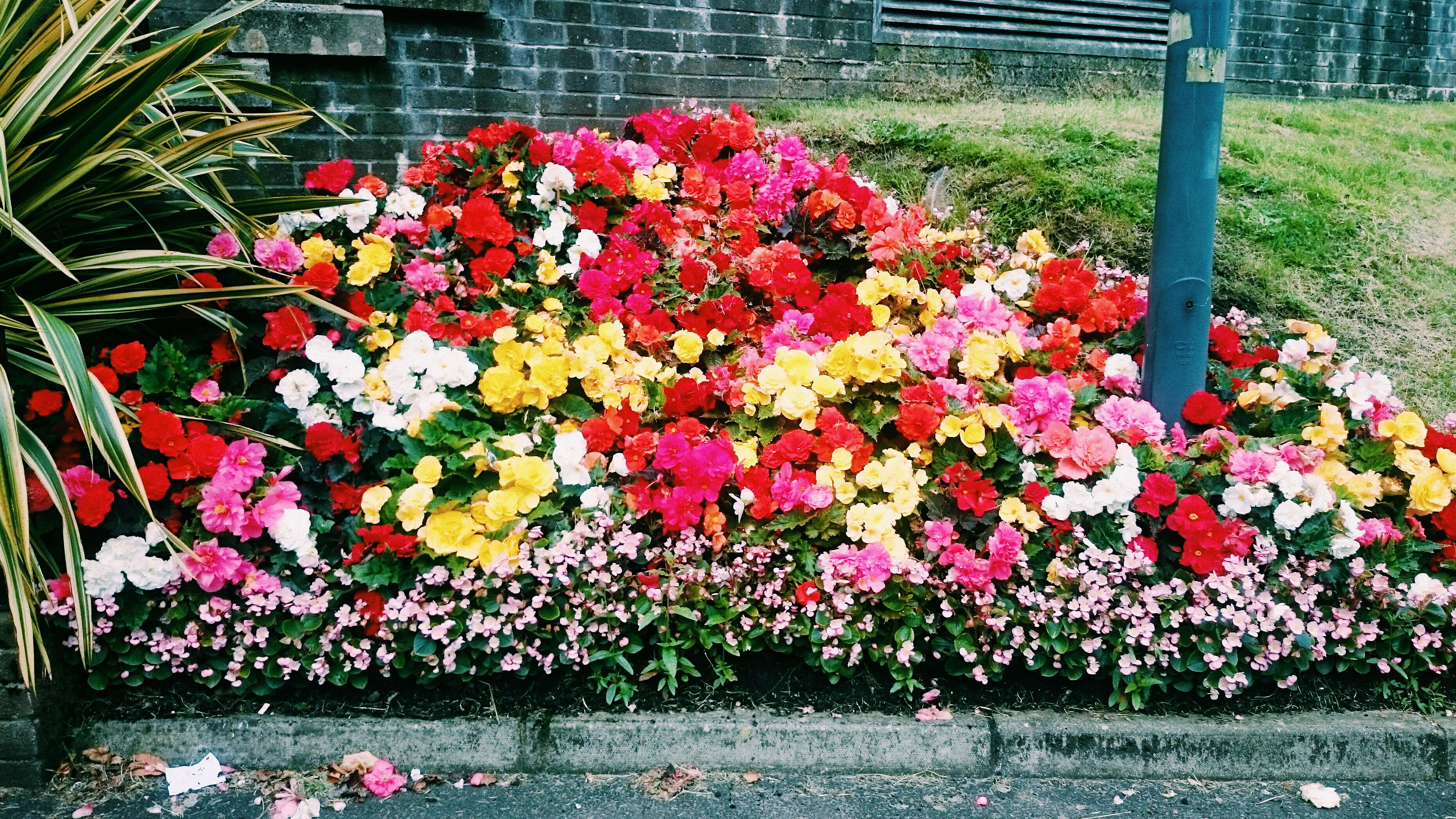 Summer in Northern Ireland.  #flowers #uni #NI