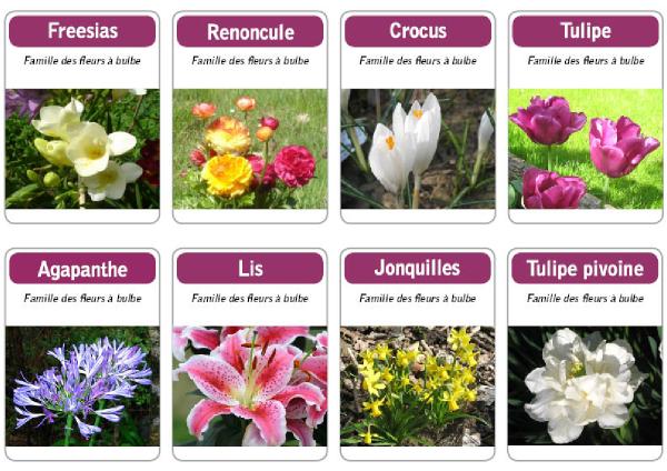 Les Noms Des Fleurs Avec Photo Fleur De Passion
