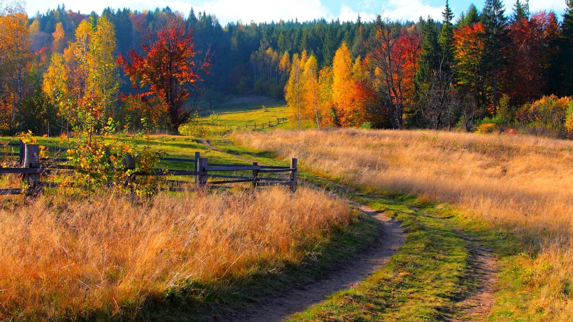 Download Wallpaper Road Autumn Forest The Sky Grass Leaves Trees Mountains Nature Colors Colorful Grass Forest Landscape Background Images Nature Autumn grass field mountain forest trees