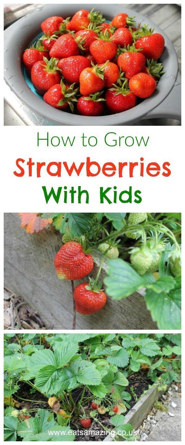 Gardening And Growing Food With Kids Everything You Need To Know About How Grow