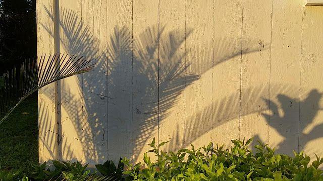 Molokai Girl: Summer Evening Light