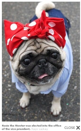 Rosie The Riveter Pug That S So Cute Pugs Pugs And Kisses