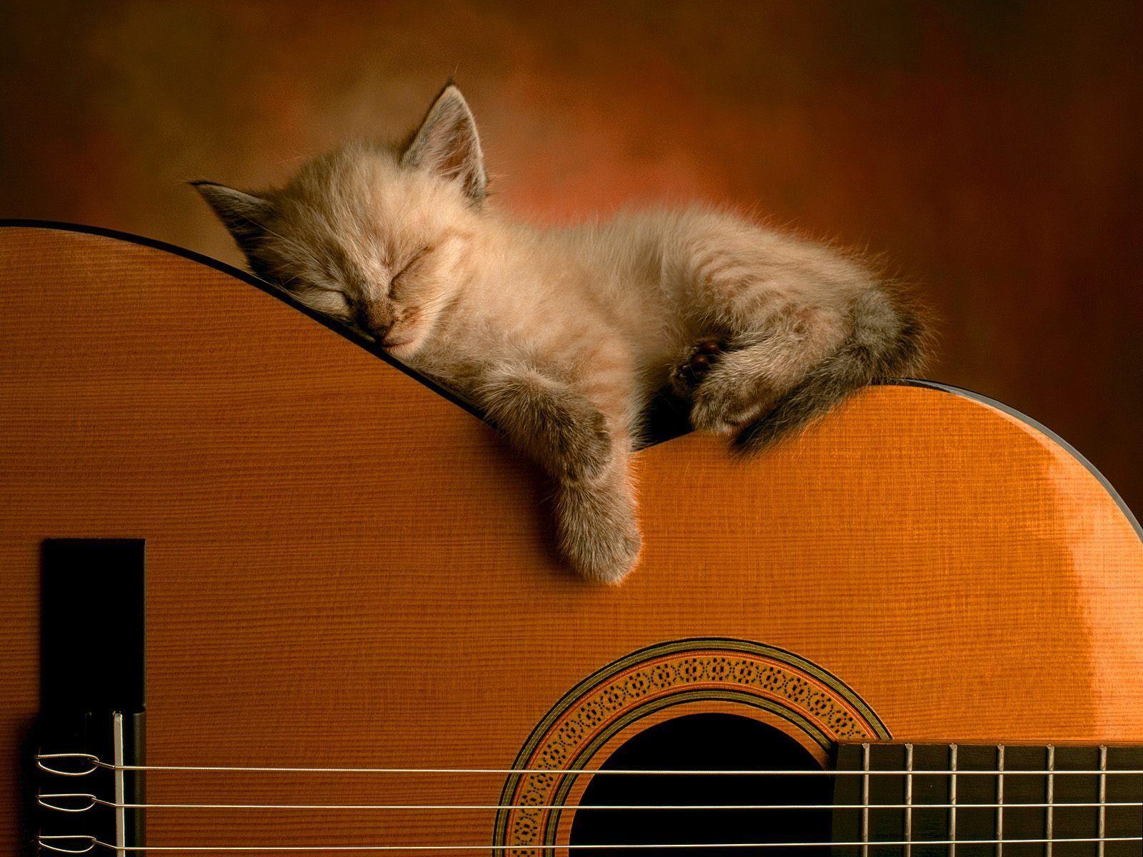 Cat Sleep On Guitar Wallpaper Sleeping Kitten Funny Cat Wallpaper Kittens Cutest
