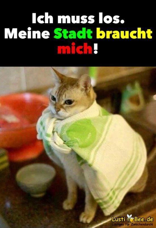 Lustiges Tierbild: Süße Katze fühlt sich wie Superman # ...