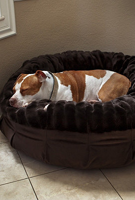 Animals Matter® Daisy Puff™ Pet Bed Frontgate Animals