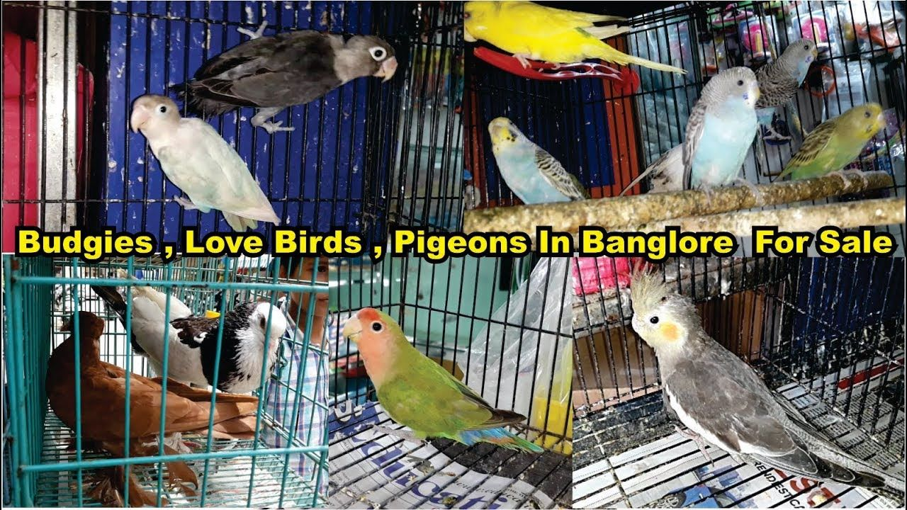 Birds Market Visit With Price Banglore India Amazing Pet S Market Pet Market Pets Birds