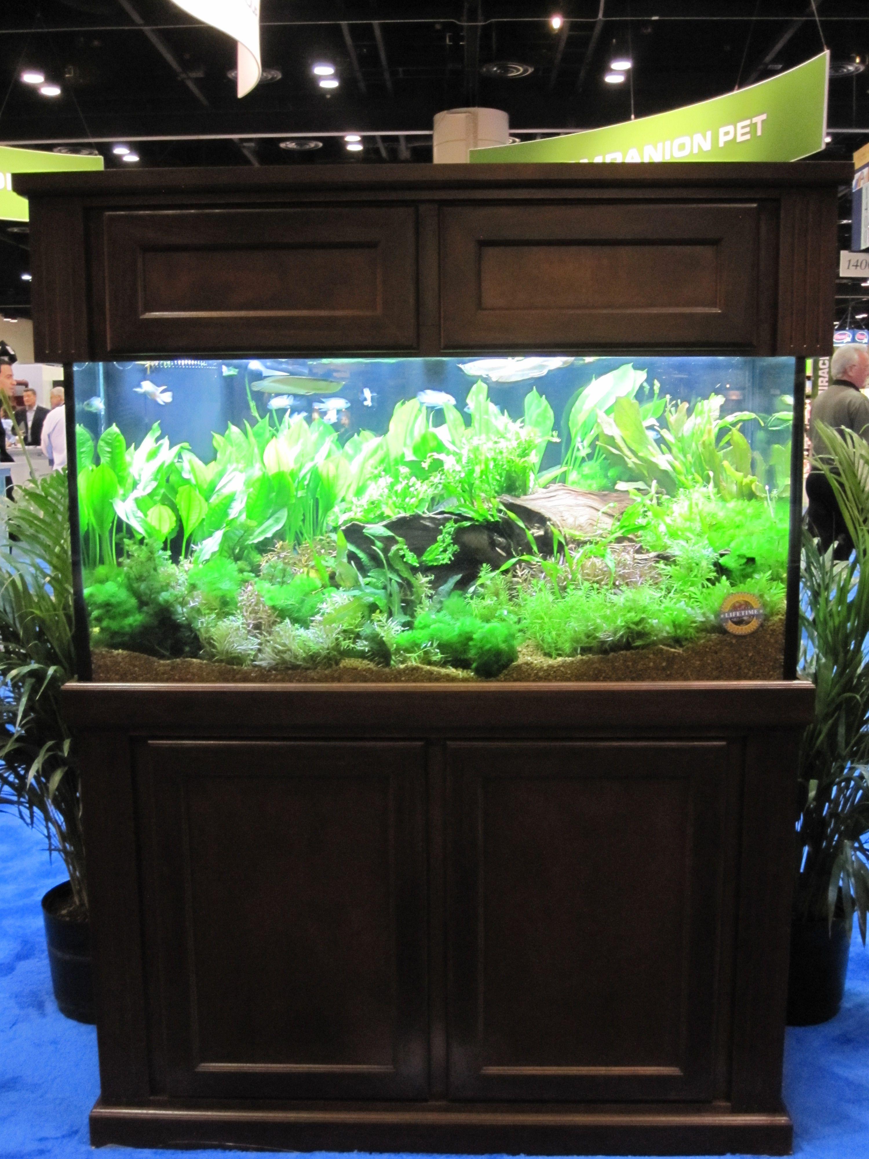 Frais De Promo Aquarium Concept