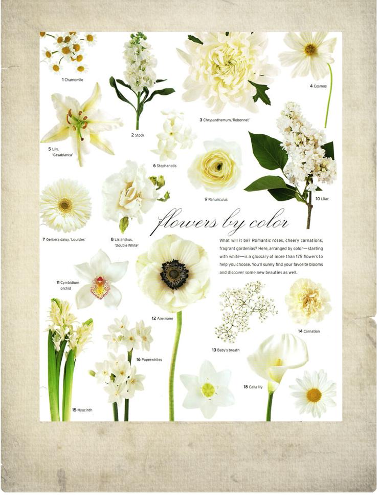 White Flowers Vintage Garden Feminine Bouquets Wedding Arrangements