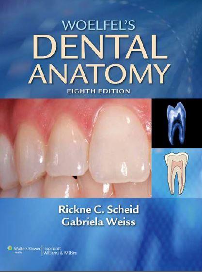 Woelfels Dental Anatomy 8th Edition PDF