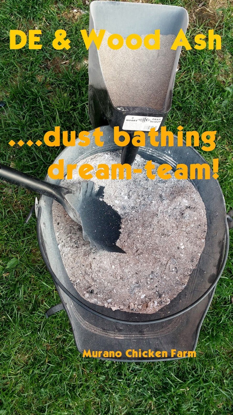 Wood ash and DE, the dust bathing dream team Chickens