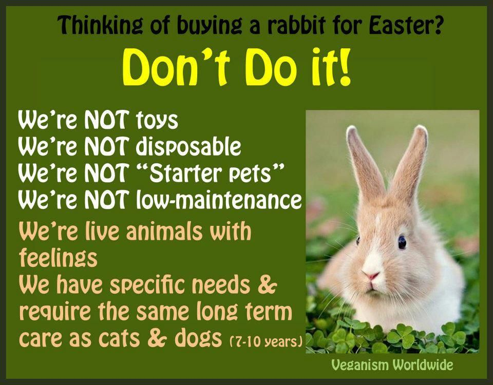 Please do not give bunnies as a cute easter gift for a child a do not give bunnies as a cute easter gift for a child negle Images