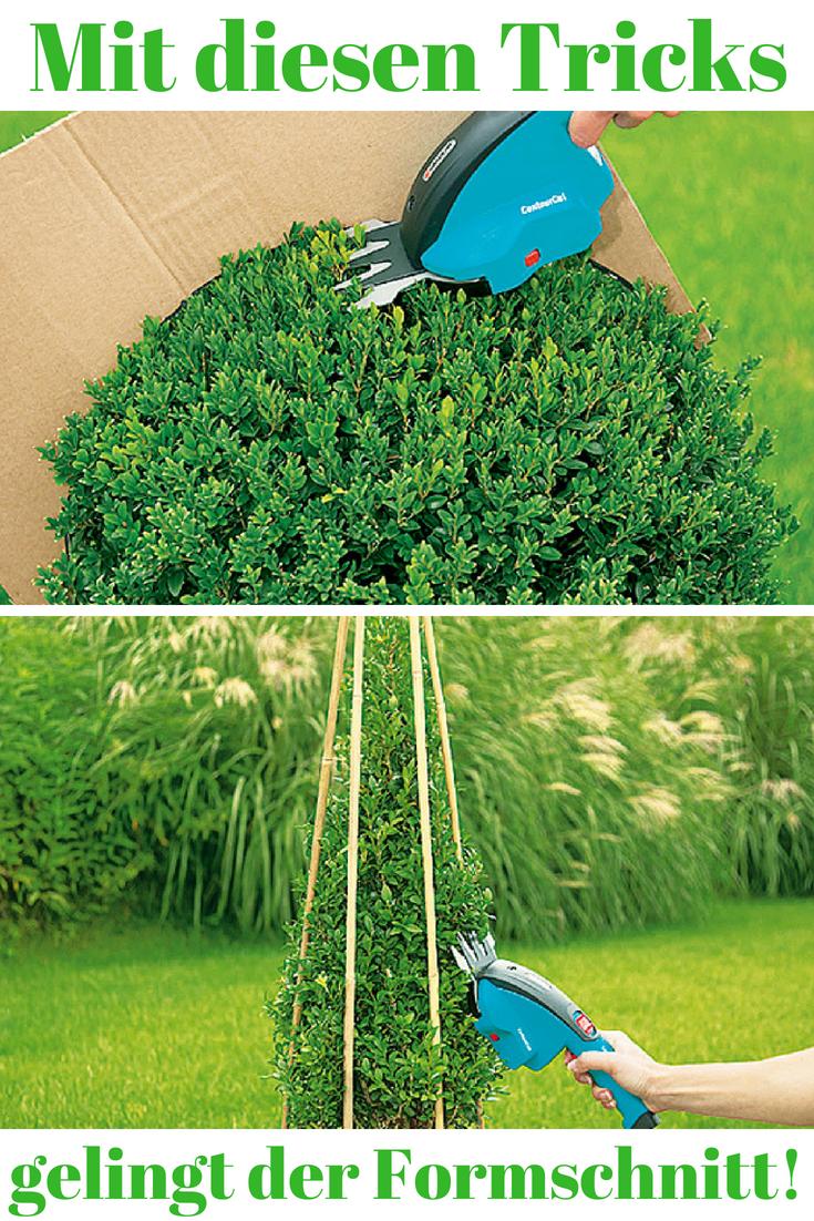 buchsbaum schneiden | blumen, pflanzen & gemüse | pinterest