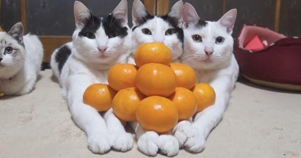 ネットで話題になった かわいいねこ おもしろねこ 猫画像集20選 ペット日和 猫 みかん 猫 ペット