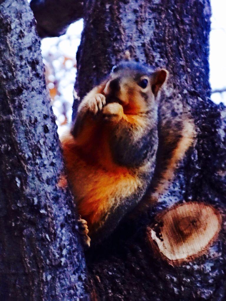 Pioneer Park, Dallas Texas Squirrel pictures, Squirrel
