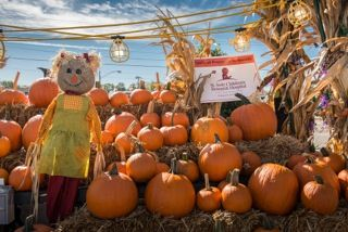 Buy a pumpkin and your money will go straight to St. Jude's Children's Hospital!