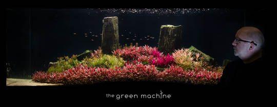 Arizona Aquascape By James Findley For The Green Machine Aquariums