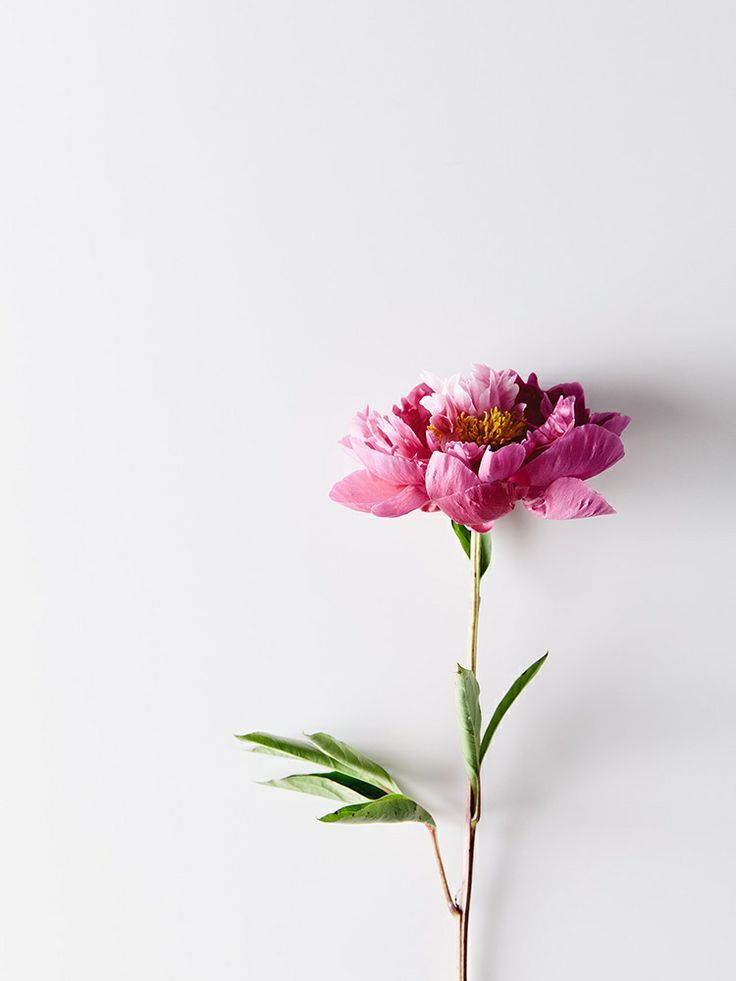Hervorragend Minimalist Flower | Little Sweet Things | Pinterest | Blumen, Hintergründe  Und Schöne Bilder
