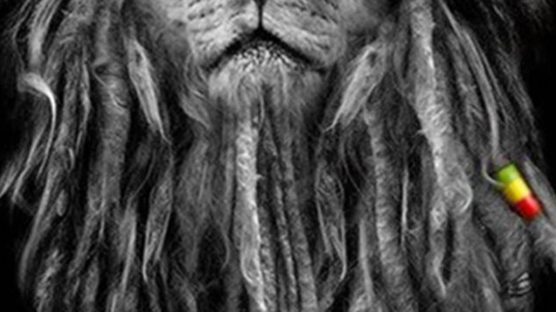 Wallpaper iphone lion - My Top Collection Rasta Lion Wallpaper Rasta Lion Wallpapers Wallpapers