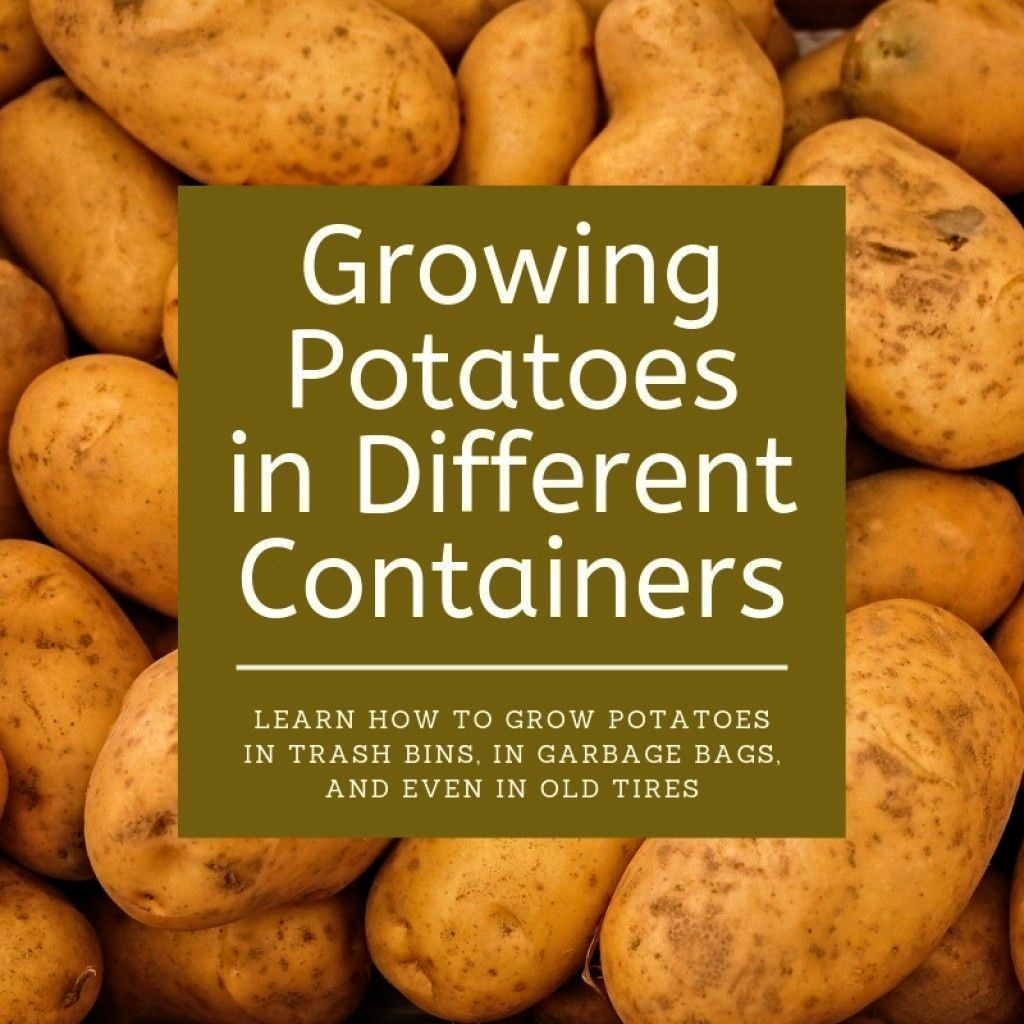 Cans Garbage Bags and Old Tires How to Grow Potatoes in Different ContabagsTrash Cans Garbage Bags and Old Tires How to Grow Potatoes in Different Contabags 10 Fruit Tree...