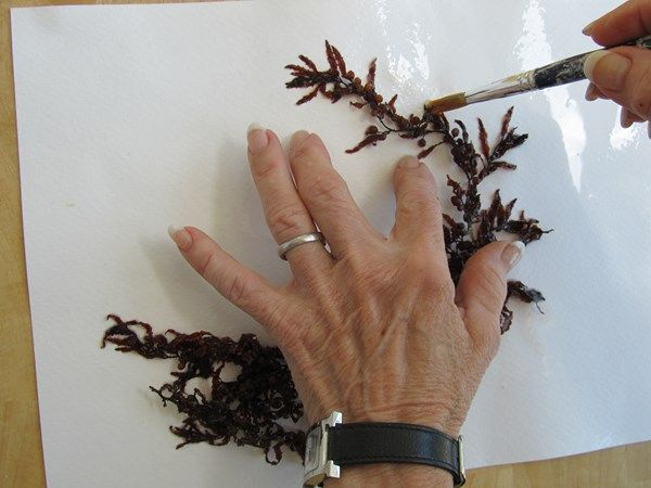 How To Press And Preserve Seaweed Gallery Garden Design Art And Craft Design Seashell Crafts Vegetable Prints