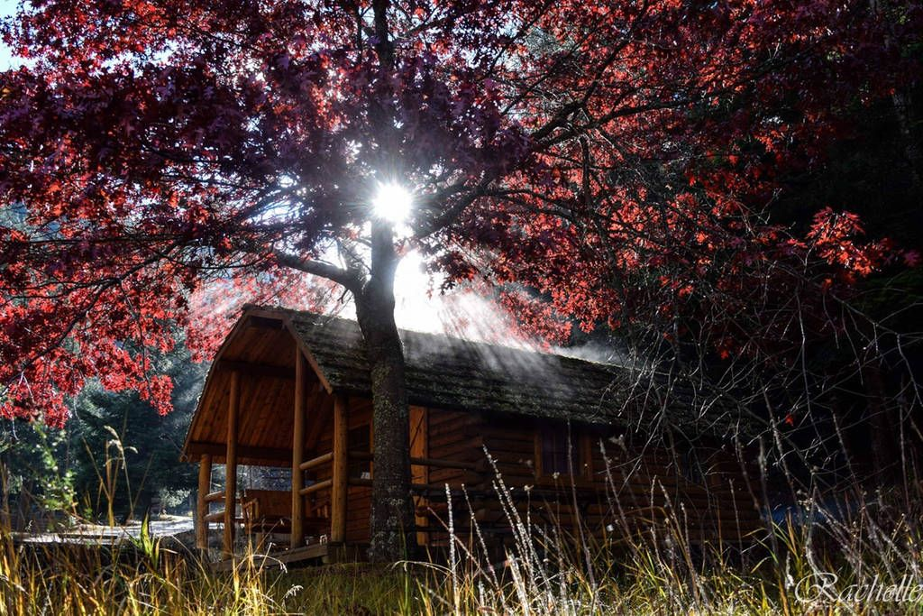 forest service cabins for rent in idaho