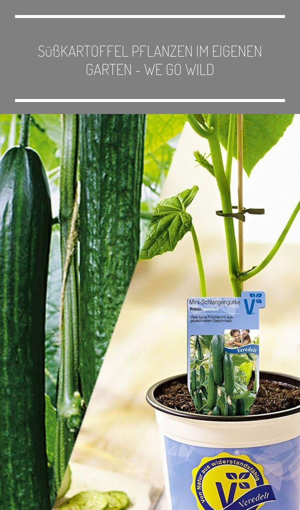 Pin On Viele Pflanzen In Der Wohnung