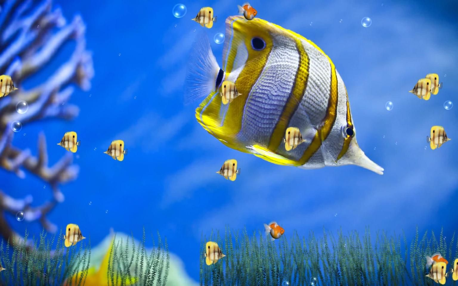 Cute Love Animation Wallpaper Moving Fish Backgrounds Free No Downloads Animated