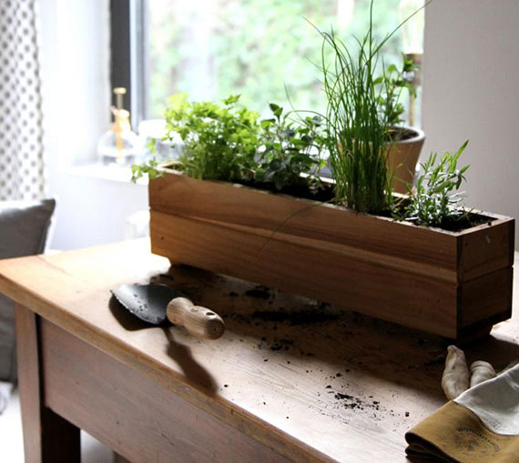Cultivating an Indoor Garden With Gardenista
