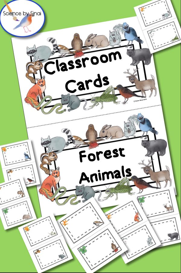 CLASSROOM CARDS LABELS Forest Woodland Animals Themed Environment Decor is part of Plant decor Classroom - Create coordinating folders or notebook labels for your NGSS Environment unit, specifically woodland forest animals and the deciduous forest ecosystem  Do you have a forest themed classroom  Need locker tags  Coat rack labels  Desk labels