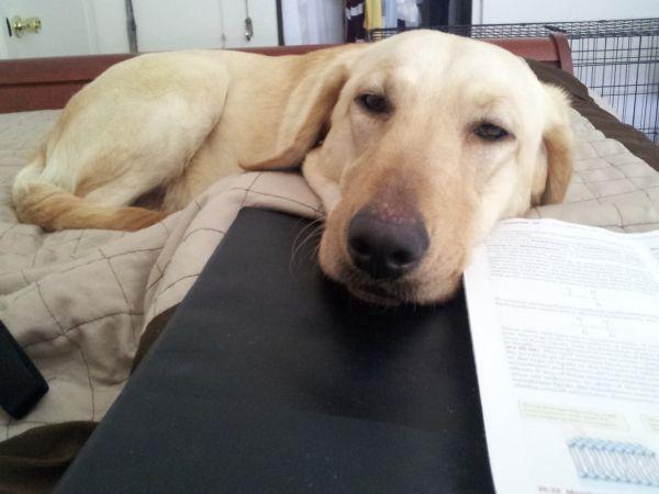 Craigslist Puppies For Sale Sacramento - Pets and Animal ...