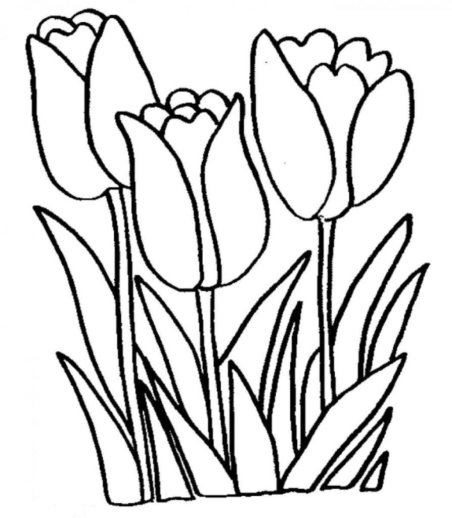 Desenhos De Tulipas Para Imprimir E Colorir Flores Para Colorir Paginas Para Colorir Desenhos Para Colorir