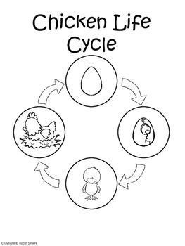 Chicken Life Cycle Life Cycle Of A Chicken Sequencing Card Craft