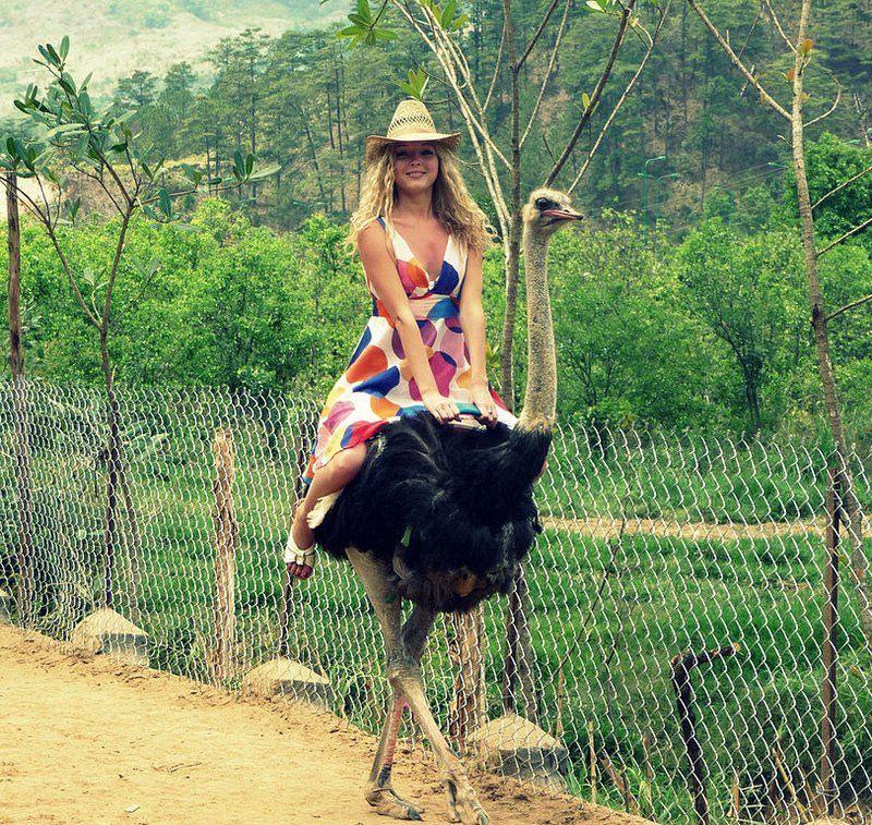 Ride an Ostrich