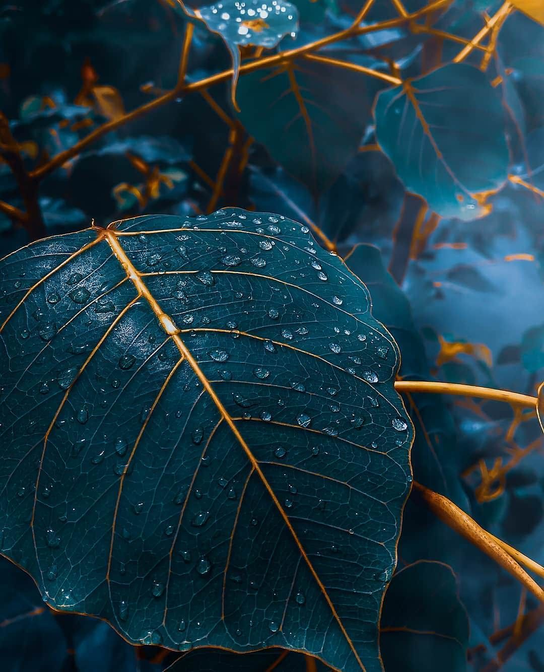Fall time blue elegant leaves Fall background wallpaper