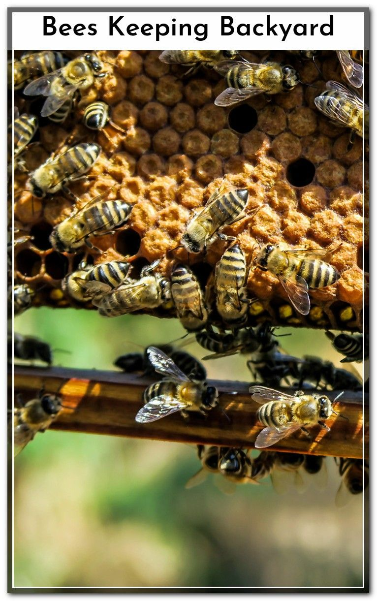 Click on the link to find out more Bees Keeping Backyard ...