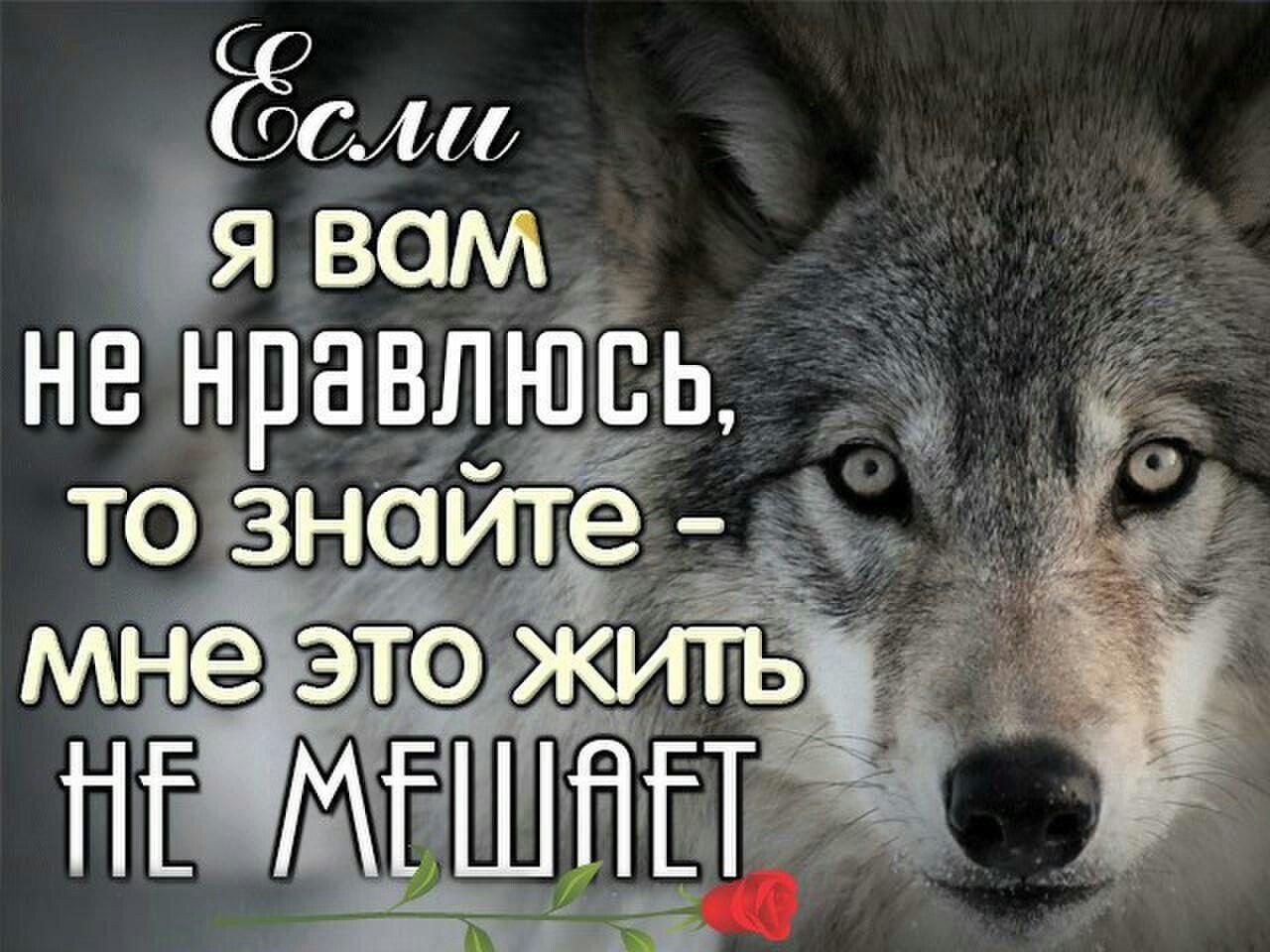 Волк статус картинки