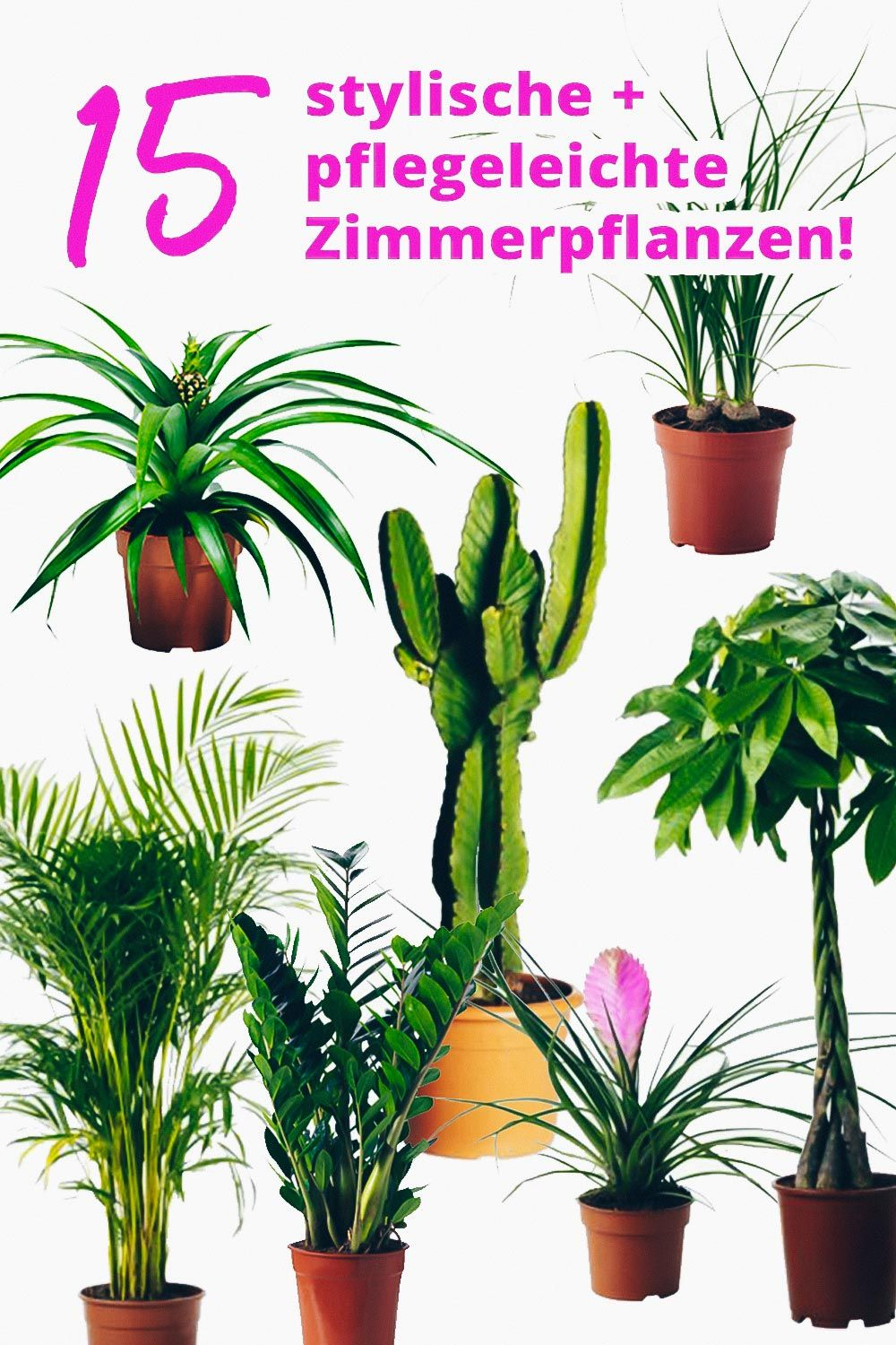 der pflanzen guide 15 stylische und pflegeleichte zimmerpflanzen urban jungle pinterest. Black Bedroom Furniture Sets. Home Design Ideas