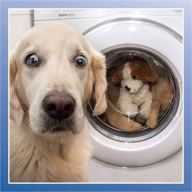 Pin Von Auf Lacher Hunde Welpen Hund Und Katze