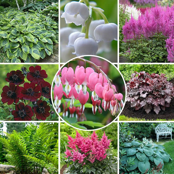Beautiful Colorful Perennial Shade Garden Bulbs