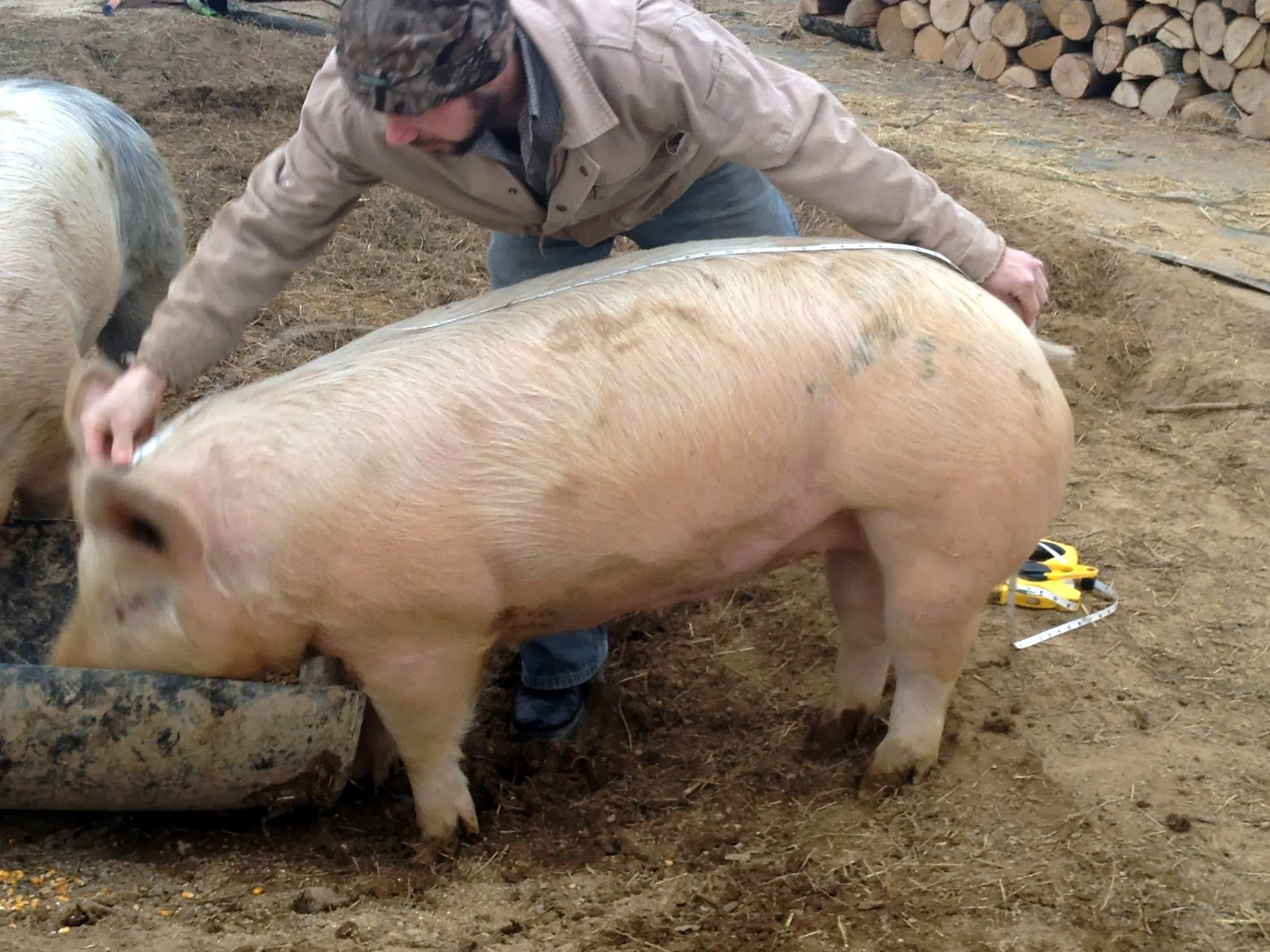 How much does a pig weigh 83