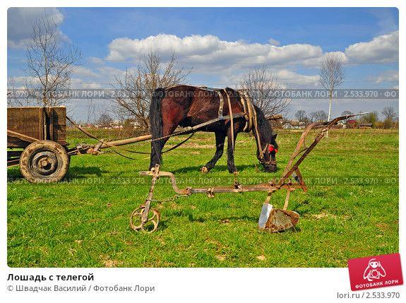 Купить фото «Лошадь с телегой» © Швадчак Василий   Лошади ...