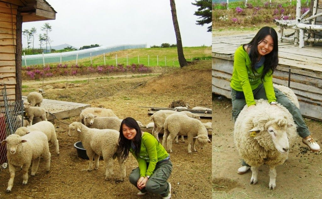 Sheep Farming Business (With images) Farming business