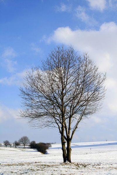 'Der letzte Wintertag?' von Heidrun Lutz bei artflakes.com als Poster oder Kunstdruck $18.03